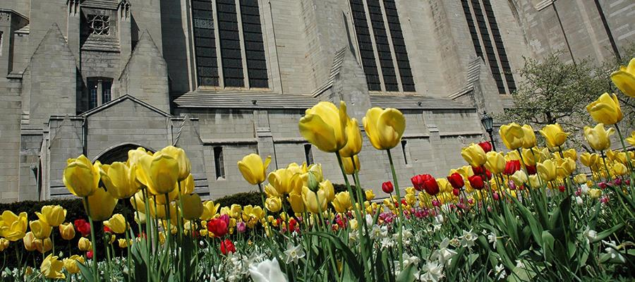 Spring Flowers in the Quad
